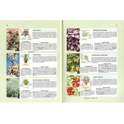 Д.Г. Хессайон. Библия комнатных растений (фото, вид 2)