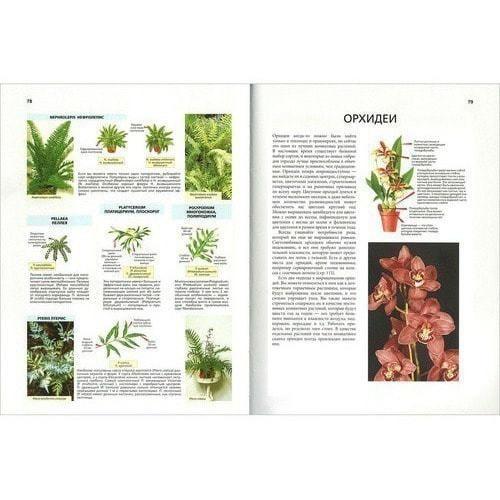 Д.Г. Хессайон. Библия комнатных растений (фото, вид 3)