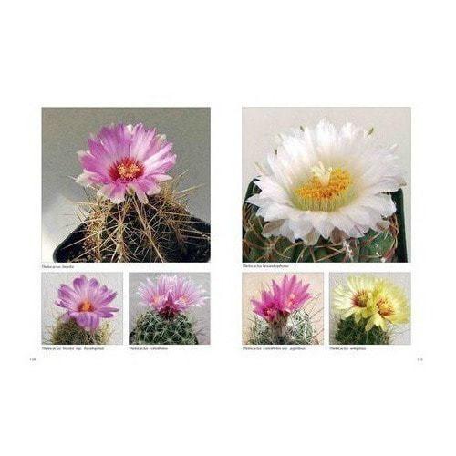 Подарочное издание. Хельга Мозес. Мои кактусы (фото, вид 4)
