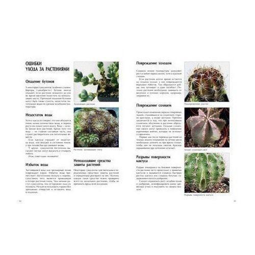 Подарочное издание. Хельга Мозес. Мои кактусы (фото, вид 3)