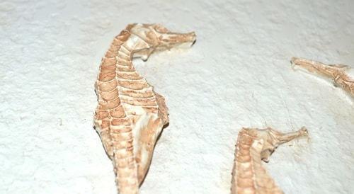 Настенное панно. Морские коньки (20 х 20 см) (фото, вид 2)
