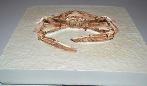 Настенное панно. Краб (20 х 20 см) (фото, вид 4)
