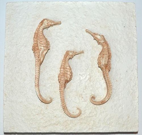 Подарочный набор из 3-х настенных панно. Морские обитатели (фото, вид 1)