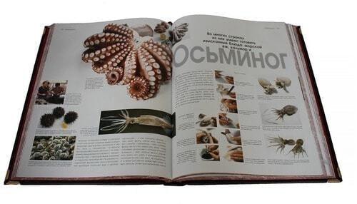 Подарочная книга в кожаном переплете. Кулинария (фото, вид 2)