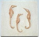 Подарочный набор из 3-х настенных панно. Морские обитатели. Вид 2