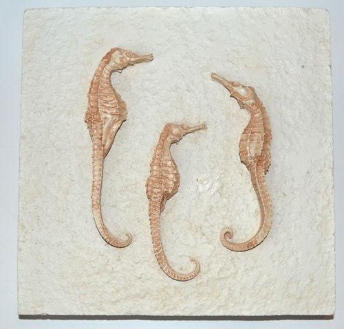 Настенное панно. Морские коньки (20 х 20 см) (фото)