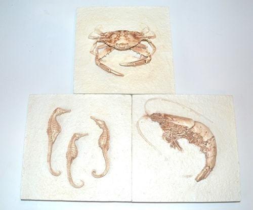 Подарочный набор из 3-х настенных панно. Морские обитатели (фото)